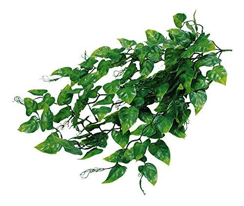 lucky-reptile-jungle-plant-philo-busch