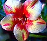 6pcs / bag gigante pomodoro Albero semi di frutta pianta Casa Giardino Bonsai Seeds imballaggio originale