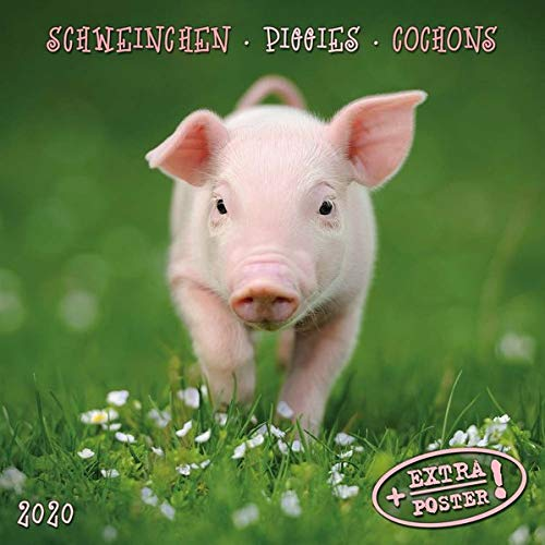 Piggies/Schweinchen 2020: Kalender 2020 (Artwork Edition) -