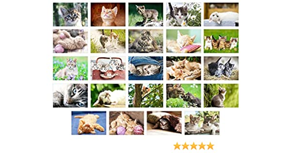Ensemble de 20 cartes postales avec chats rigolos et dr/ôles Chats dr/ôles 10 motifs x 2 pi/èces pour collectionneurs et postcrossing par EDITION COLIBRI
