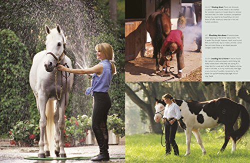 horse care The horse course: introduction to basic care and management from university of florida there are over 100 million horses, donkeys and mules in the world today and owners of these animals can be found on almost every continent and in almost every.