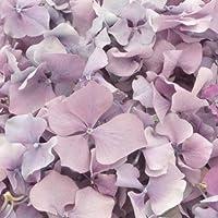 Confeti de pétalos de flores lilas de hortensia liofilizada