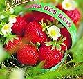 """Erdbeerprofi - Erdbeere""""Mara de Bois"""" - 10 Erdbeerpflanzen/Erdbeersetzlinge - gut durchwurzelt, immertragend - Pflanzzeit: August - September; Ernte: Juni-Oktober von Erdbeerprofi.de bei Du und dein Garten"""
