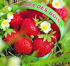"""Erdbeerprofi - Erdbeere""""Mara de Bois"""" - 10 Erdbeerpflanzen/Erdbeersetzlinge - gut durchwurzelt, immertragend - Pflanzzeit: August - September; Ernte: Juni-Oktober"""