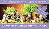 SAFLAX - Anzuchtset - Kräuter und Gewürze der mediterranen Küche - Mit 2 Samensorten, Gewächshaus, Anzuchtsubstrat, Zellfasertöpfen zum Umtopfen und Anleitung