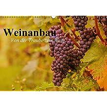 Weinanbau. Von der Traube zum Wein (Wandkalender 2016 DIN A3 quer): Schöne Impressionen vom interessanten Weinbau (Geburtstagskalender, 14 Seiten) (CALVENDO Natur)