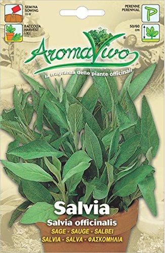 Hortus 61ARO0245 Aromavivo Salvia, 13x0.2x20 cm