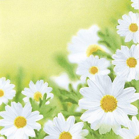 20 Servietten White daisies - Hübsches Margeritenfeld / Blumen 33x33cm