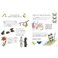 Il-mondo-delle-farfalle-Ediz-a-colori
