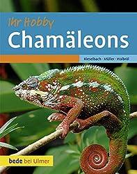 Chamäleons: Ihr Hobby