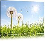 Pusteblumen auf sonniger Frühlingswiese Format: 100x70 auf Leinwand, XXL riesige Bilder fertig gerahmt mit Keilrahmen, Kunstdruck auf Wandbild mit Rahmen, günstiger als Gemälde oder Ölbild, kein Poster oder Plakat