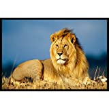 Idecor Most Popular Lion Wall Poster For Living Room, Bedroom, Lobby – Posters For Lion With Matte Finish - Size 18x12 Inches