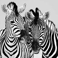 Feeling at home, Stampa artistica x cornice - quadro, fine art print, Namibia Zebre cm 85x85