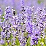 Weleda Lavendel Entspannungsdusche, 1er Pack (1 x 200 ml) - 4