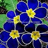 GETSO 100 Pezzi Europa Primrose Fiore Bonsai Piante Primula Reale Sera Bonsai Fiore per Le Piante da Giardino di casa: 2