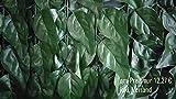 Endlich wieder da - Sichtschutz Kunsthecke Kirschlorbeer 2,80 x 1,45 m - einfach angebracht - inkl. Versand - künstliche Hecke - Kunststoffhecke - Blattnachbildung Kirschlorbeer