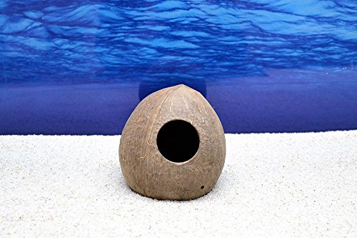 Dohse Aquaristik Aquarium-Deko Kokosnuss Höhle Schale von Hobby Größe L für Welse Fische Versteck (Schalen Fisch Aquarium)