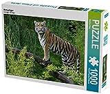 Armurtiger 1000 Teile Puzzle quer (CALVENDO Tiere)
