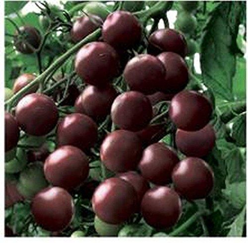 PLAT FIRM GRAINES DE GERMINATION: 50 - Graines: Tomate cerise noire - Une vraie tomate cerise noire. & WOW !! - Quel goût!BATEAU GRATUIT!