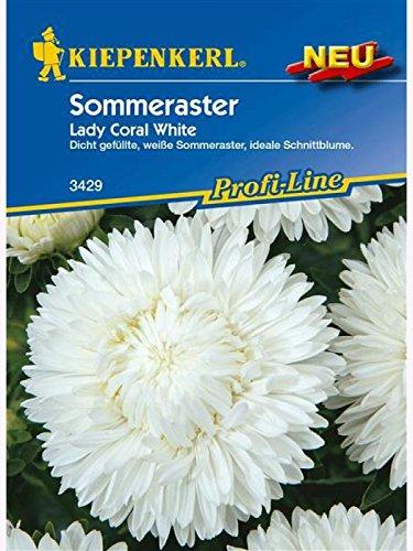 Astern Sommeraster Lady Coral White (Ernte Womens Erde)