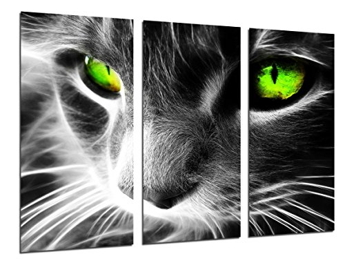 Cuadro Moderno Fotografico Gato Ojos de Colores, Animales, 97 x 62 cm,