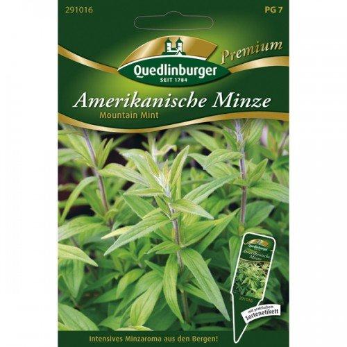 Amerikanische Bergminze Mountain Mint