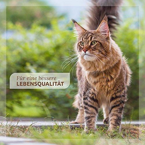 AniForte Milben Stop Spray 100 ml – versch. Größen – Naturprodukt für Hunde, Katzen & Pferde - 3