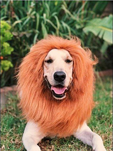 Kostüm Hunde Den Für Löwenmähne - OMG Adorables - Löwenmähne für Hunde - Halloween-Kostüm