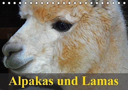 Preisvergleich Produktbild Alpakas und Lamas (Tischkalender 2016 DIN A5 quer): Südamerikas wuschelige und spuckende Wiederkäuer (Geburtstagskalender, 14 Seiten) (CALVENDO Tiere)