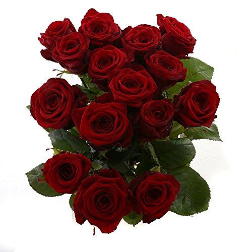 Choice of Green - 1 bouquet de rose moyen Naomi Rose - 15 tiges - Hauteur ↕ 60 cm - Qualité de Hollande - Frais du cultivateur