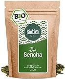 Bio Sencha Grüntee (250g) - Top Japan-Style - Spitzenpreis - Vorratspackung für 100 Tassen - Mild, leicht grasig, dabei feinherb und blumig - Fairbiotea-Zertifikat - DE-ÖKO-005 - GP: €3,96/100g