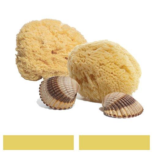 2facialcare esponjas de mar–Mediterranean seda Sea esponja–blanqueado–perfecto para limpieza sensible piel–Eco-friendly–biodegradable