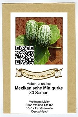 Mexikanische Minigurke - Melothria scabra - sehr ertragreich - 30 Samen von exotic-samen bei Du und dein Garten