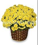 AGROBITS 100 piezas del crisantemo planta de Bonsai Bonsai flor del aster Flor Seedsplants crisantemo del arco iris perenne de flores a domicilio jardín: 23
