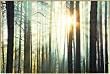 Kunstloft® fotografía artística enmarcada 'Danza del Sol' 90x60cm | fotografía contemporánea Cubierta por Vidrio | Bosque Sol Marrón Amarillo | fotografía artística con Marco de Aluminio