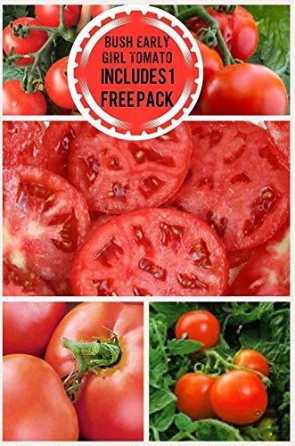 Potseed Keimfutter: Bush Early Girl Hybrid Tomato 200 Samen UPC 658921943755 enthält eine kostenlose Packung -