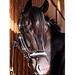 Meister Comfort Headcollar for Nobility, Travel, Stable Horse Headcollar Halter 19