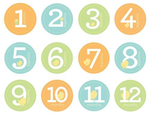 Pearhead 60032 First year Belly Stickers, Babybauch Sticker für das erste Jahr, unisex (Babybauch Bilder)