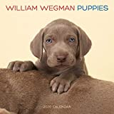 William Wegman Puppies 2020 Calendar
