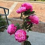 ZZJJWW Emoticon Peonia Fiore 3 Testa 5 Teste Pavimento a fiori Soggiorno, Fiori di seta di plastica coperta Bouquet di fiori secchi, Fiore falso Decorazione arco di fiori d'arte, 5 teste di luce Rose Red
