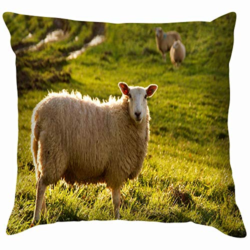 Home Fashion Pillowcase Lone Sheep Meadow November Sun Parks Outdoor Sheep Parks Outdoor 18x18 IN