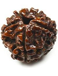 55ct nepalés Rudraksha cuentas cinco Mukhi 5cara Natural original Rudraksh Loose Bead
