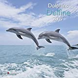 Delfine 2017 - Tierkalender 2017, Meerekalender, Delfinkalender, Naturkalender - 30 x 30 cm