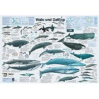 Wale und Delfine (Planet-Poster-Box)