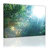 Kunstdruck - Regenwald in Hawaii - Bild auf Leinwand - 80x60 cm 1 teilig - Leinwandbilder - Bilder als Leinwanddruck - Landschaften - Urwald auf Hawai - Kauai