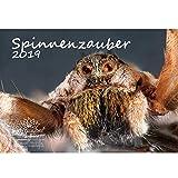 Spinnenzauber · DIN A4 · Premium Kalender 2019 · Insekten · Spinnen · Spinne · Schmetterling · Fliegen · Natur · Tiere · Geschenk-Set mit 1 Grußkarte und 1 Weihnachtskarte · Edition Seelenzauber