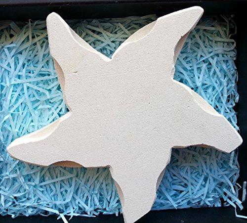 stella-marina-fatta-a-mano-in-pietra-leccese-inclusa-elegante-confezione-e-bigliettino-in-inglese-pr