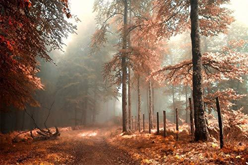 DIY Ölgemälde Kit, Malen Nach Zahlen Kit Für Kinder Und Erwachsene Nebel Im Herbst Wald DIY Leinwand Malerei Für Erwachsene Anfänger 40X50CM Herbst Nebel
