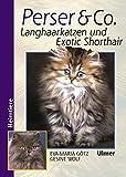 Perser & Co.: Langhaarkatzen und Exotic Shorthair (Heimtiere)