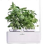 Odyseed - Potager d'Intérieur 100% Bio - Cultivez vos herbes aromatiques - Basilic Cannelle et Citron Inclus